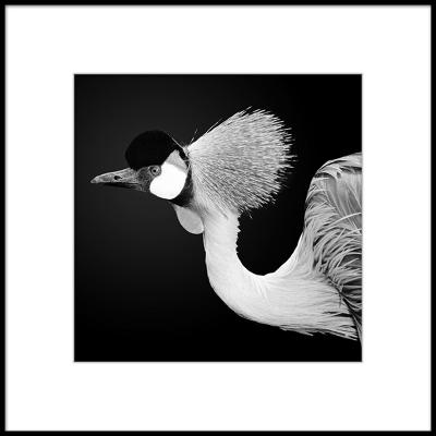 CUADRO FOTO BIRD A